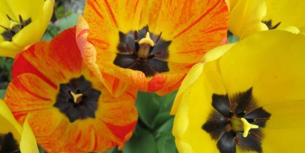 Užívejte si jaro ve Frýdlantě!, odkaz se otevře v novém okně