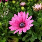 květina web, autor: Martina Petrášková