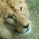 zoo úvodní